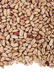 Pinto beans or mottled beans Stock Photo