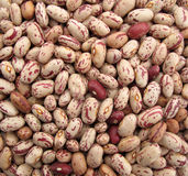 Pinto beans multicolor Royalty Free Stock Photos