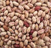 Pinto beans multicolor Royalty Free Stock Photos