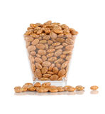 Pinto beans in  plastic bowl isolated on a white background Royalty Free Stock Photo