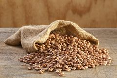 Pinto Beans in Sack Royalty Free Stock Photography