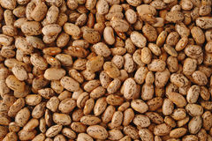 Pinto beans Stock Image