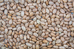 Pinto beans texture background Royalty Free Stock Images