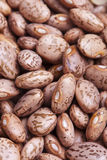 Pinto beans texture Royalty Free Stock Photography