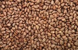 Pinto Beans texture Royalty Free Stock Photo