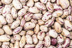 Pinto beans texture Royalty Free Stock Image