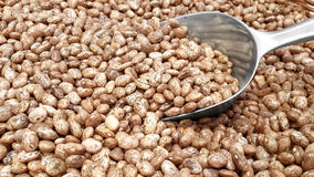Pinto Beans and a Transfer Scoop Stock Images