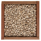 Pinto beans in a wooden box Stock Images