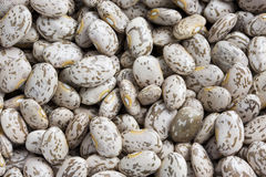 Pinto or mottled beans Royalty Free Stock Photo