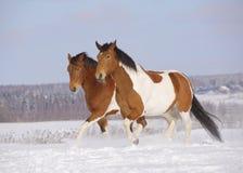 Pintopferde im Winter Lizenzfreies Stockfoto