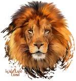 Pintor da aquarela do leão Fotos de Stock Royalty Free