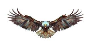 Pintou uma águia do voo em uma parte dianteira branca do fundo