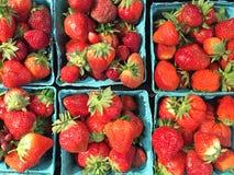 Pints_of_Strawberries Images libres de droits