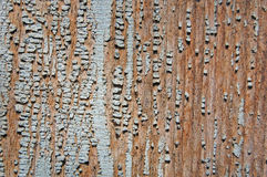 Pintura agrietada en una pared de madera Pared de tablones de madera con los rastros de la pintura Fotos de archivo libres de regalías