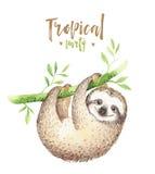 Pintura aislada cuarto de niños de la pereza de los animales del bebé Dibujo tropical del boho de la acuarela, ejemplo tropical d ilustración del vector