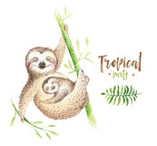 Pintura aislada cuarto de niños de la pereza de los animales del bebé Dibujo tropical del boho de la acuarela, ejemplo tropical d