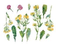 Pintura al óleo de flores salvajes: sistema de tallos con las flores y diversas hojas Fotos de archivo