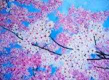 Pintura al óleo del flor de cereza rosado. stock de ilustración