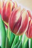 Pintura al óleo del tulipán Imágenes de archivo libres de regalías