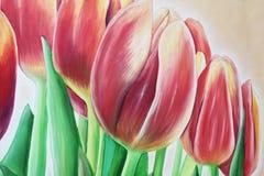 Pintura al óleo del tulipán Imagen de archivo libre de regalías