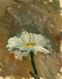 Pintura al óleo una sola flor camonile blanca y amarilla Foto de archivo