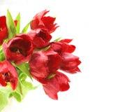 Pintura al óleo de tulipanes Imagenes de archivo