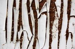 A pintura branca lasca-se em uma madeira marrom Imagem de Stock