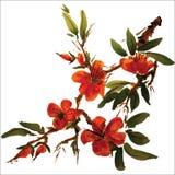 Pintura chinesa das flores ilustração do vetor