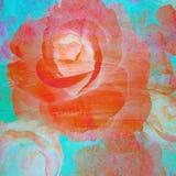 Pintura color de rosa de la flor del extracto en fondo de la pared Imagen de archivo