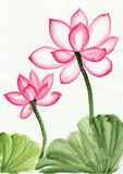 Pintura da aguarela da flor de lótus cor-de-rosa Fotos de Stock Royalty Free