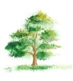 Pintura da aguarela de uma árvore ilustração royalty free
