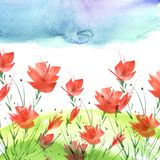 Pintura da aguarela Um ramalhete das flores de papoilas vermelhas ilustração stock