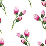 Pintura da aquarela com flores de Rosa seamless Fotografia de Stock