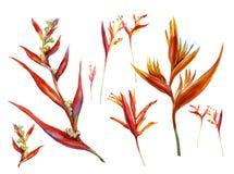 Pintura da aquarela da flor Imagens de Stock Royalty Free