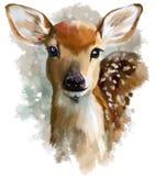 Pintura da aquarela da jovem corça Fotos de Stock Royalty Free
