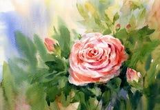 A pintura da aquarela de aumentou Imagem de Stock Royalty Free