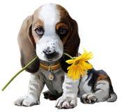 Pintura da aquarela do cão de Basset Imagem de Stock