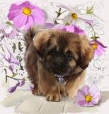 Pintura da aquarela do cachorrinho Imagens de Stock