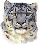 Pintura da aquarela do leopardo de neve ilustração do vetor