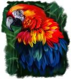 Pintura da aquarela do papagaio Foto de Stock Royalty Free
