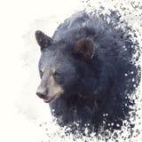 Pintura da aquarela do retrato do urso preto fotos de stock