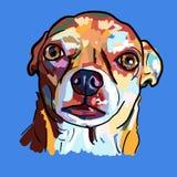Pintura da cara engraçada do cão da chihuahua no fundo azul ilustração stock