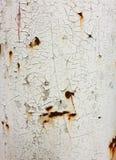 Pintura da casca em uma parede velha Foto de Stock