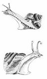 Pintura da ilustração do esboço do caracol Ilustração do Vetor