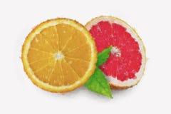 Pintura da laranja e da toranja da aquarela no fundo branco imagem de stock