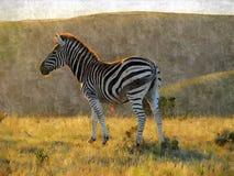 Pintura da zebra Fotos de Stock