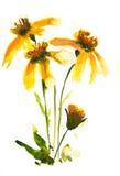 Pintura das flores selvagens Imagens de Stock Royalty Free