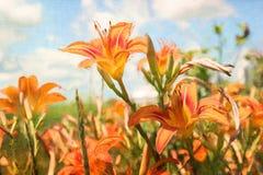 Pintura de Digitaces de daylilies anaranjados Foto de archivo libre de regalías