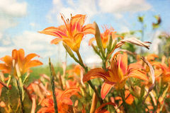 Pintura de Digitas de daylilies alaranjados Foto de Stock Royalty Free