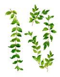 Pintura de la acuarela de hojas Imágenes de archivo libres de regalías
